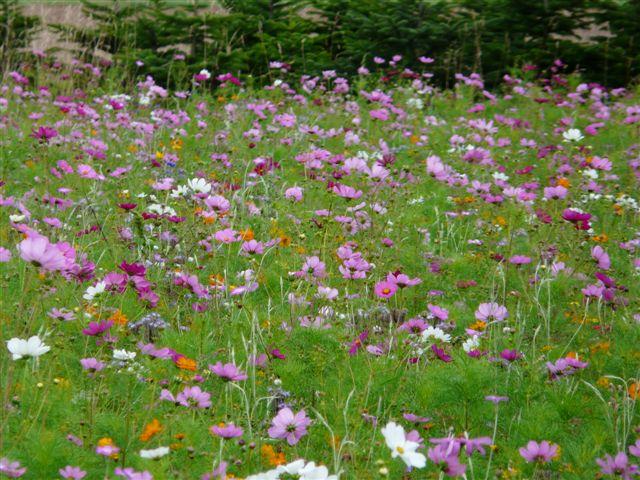 petit parterre floral 10_aou11