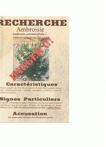 Plante envahissante - Ambroisie, Ambrosia artemisiifolia Cci13010