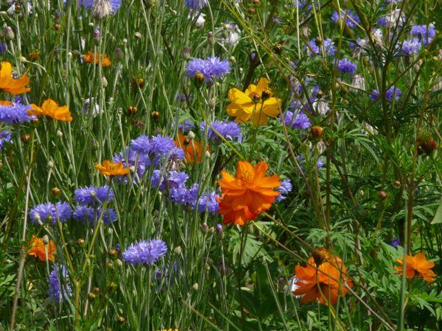 petit parterre floral Sam_2_18