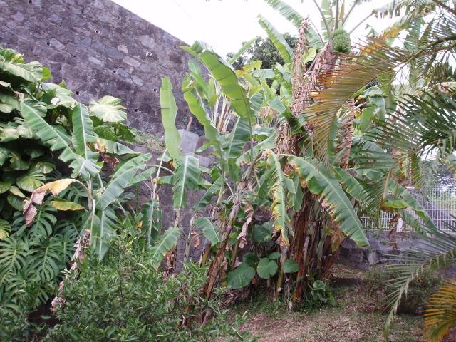 Mes installations refaites avec un terra exterieur P8240012