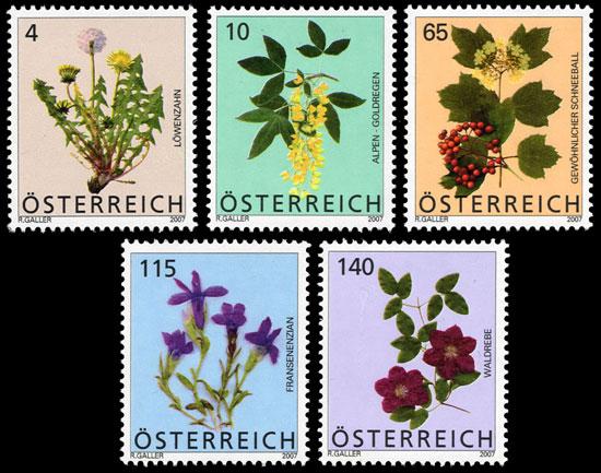 Heimische Blumen At270510