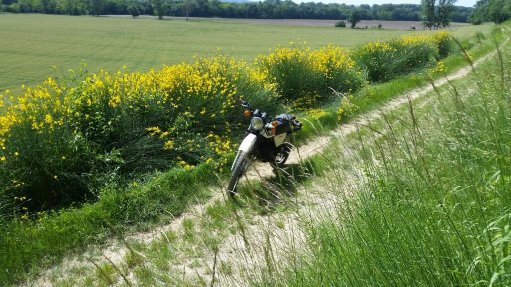 Fred de Haute Garonne 20200511