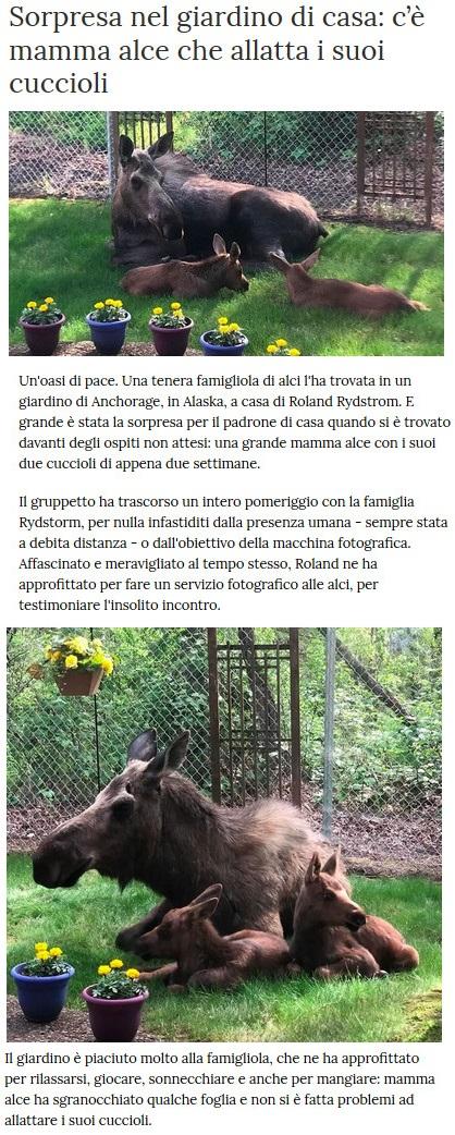 Notizie di animali....nel mondo - Pagina 4 Alce10