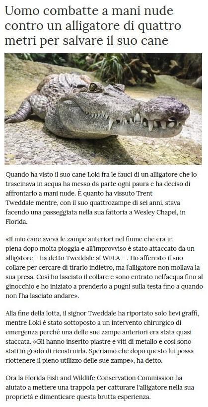 Notizie di animali....nel mondo - Pagina 3 Alliga10