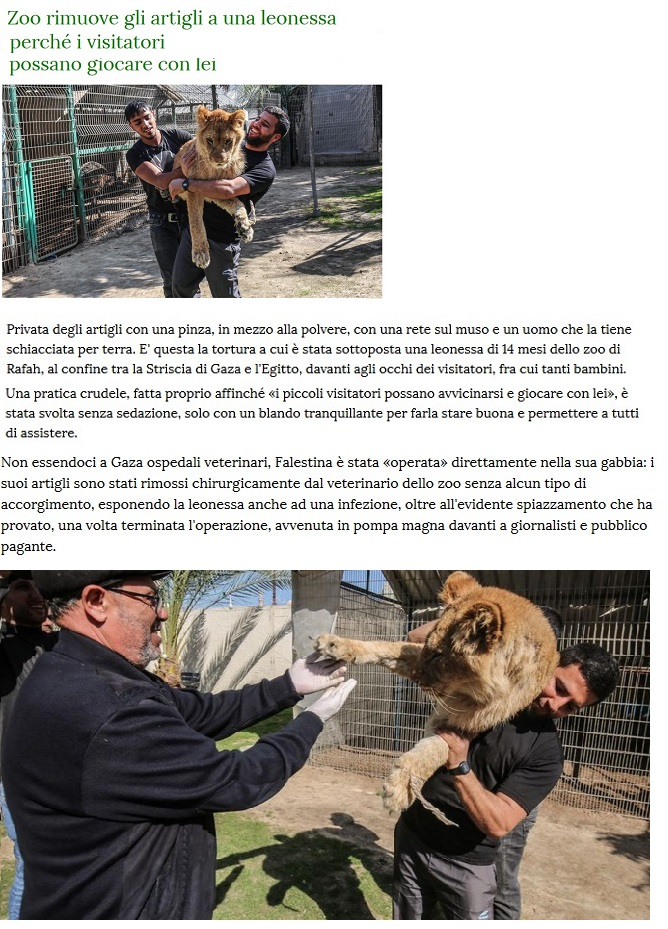 Animali... strani - Pagina 9 Anima121