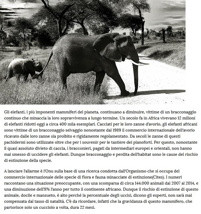 Animali... strani - Pagina 10 Anima141