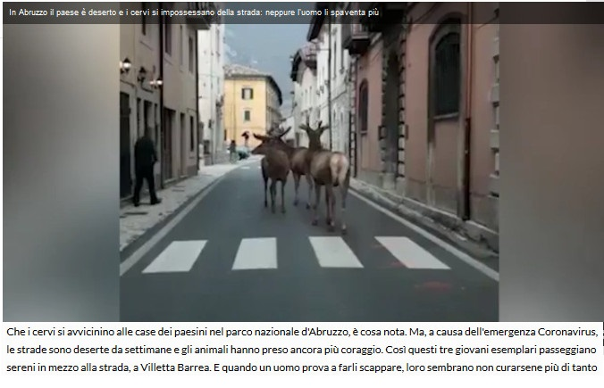 Notizie di animali....nel mondo - Pagina 2 Anima261