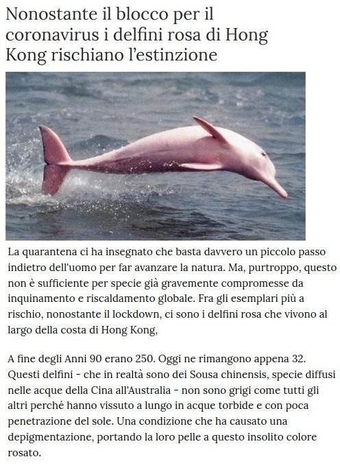 Notizie di animali....nel mondo - Pagina 2 Anima265