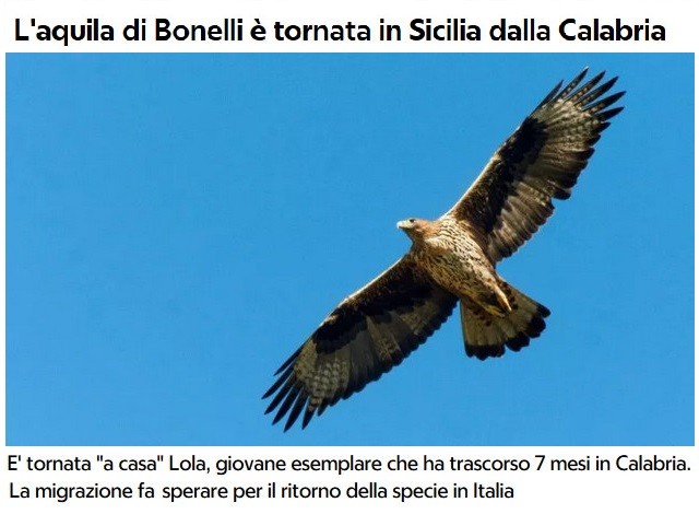 Animali... strani - Pagina 18 Aquila13