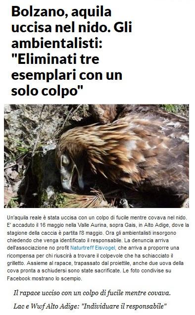 Notizie di animali....nel mondo - Pagina 3 Aquila14