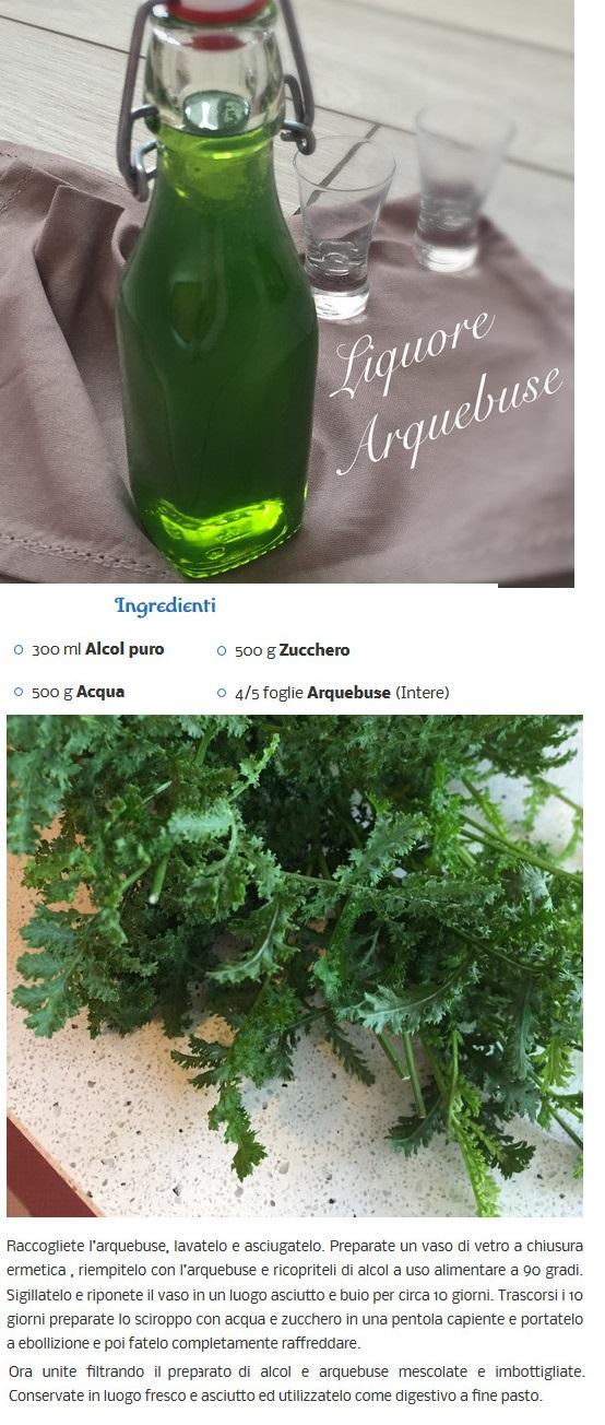 ricetta liquore alla menta.....ed altri Arqueb11