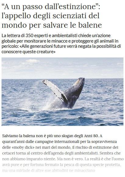 Notizie di animali....nel mondo - Pagina 7 Balene10