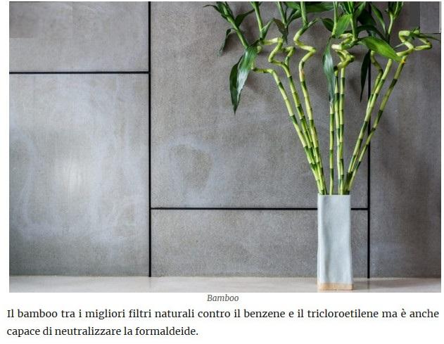 Le piante della salute Bamboo10