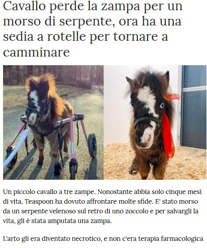 Notizie di animali....nel mondo - Pagina 2 Cavall11