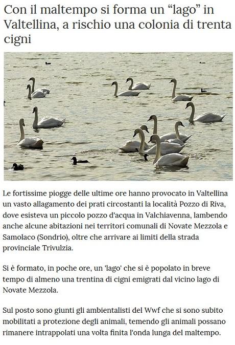 Notizie di animali....nel mondo - Pagina 7 Cigni10