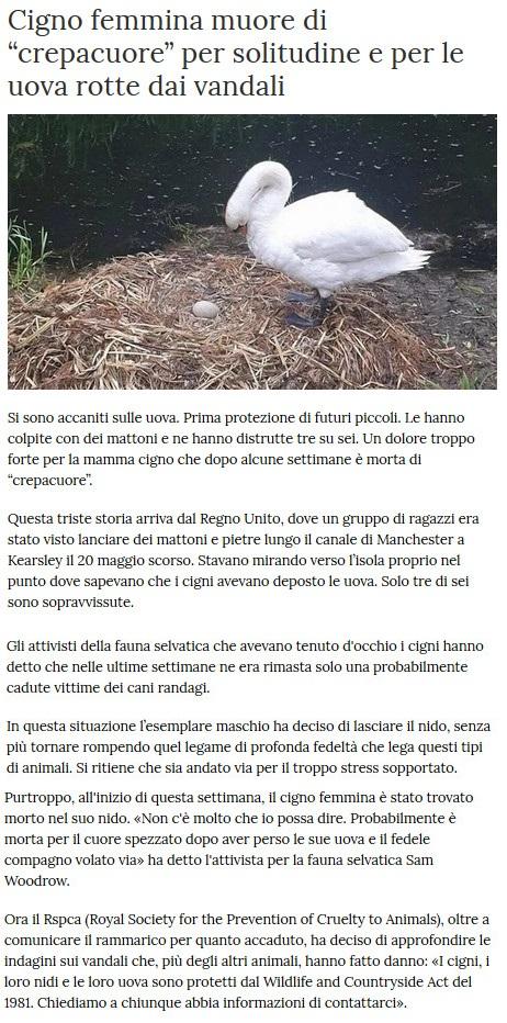 Notizie di animali....nel mondo - Pagina 4 Cigno10