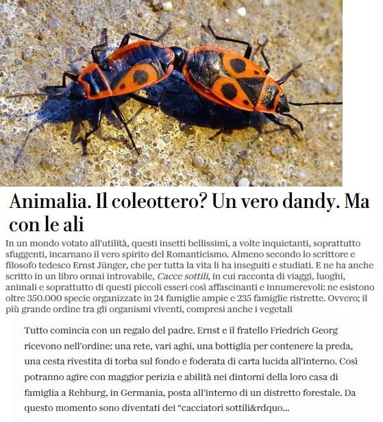 Notizie di animali....nel mondo - Pagina 7 Coleot10
