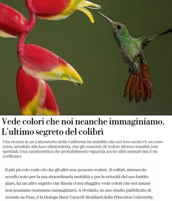 Notizie di animali....nel mondo - Pagina 4 Colibr10