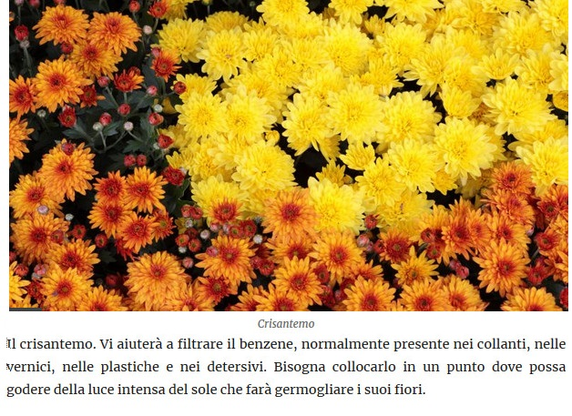 Le piante della salute Crisan10