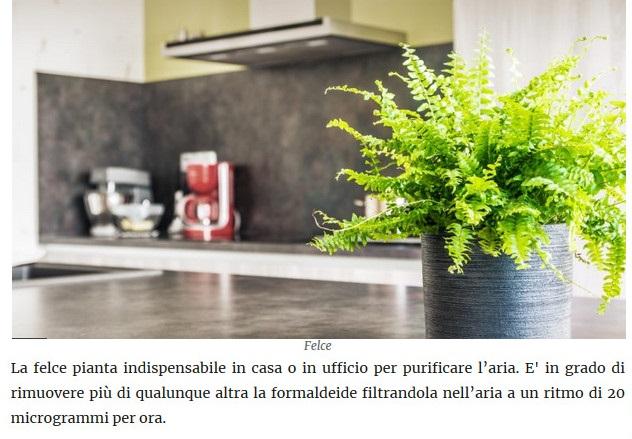 Le piante della salute Felce10