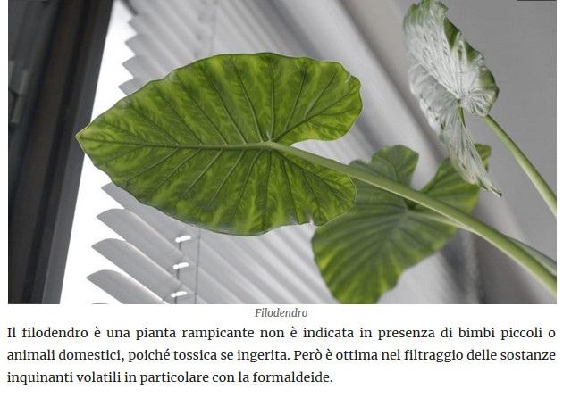 Le piante della salute Filode10
