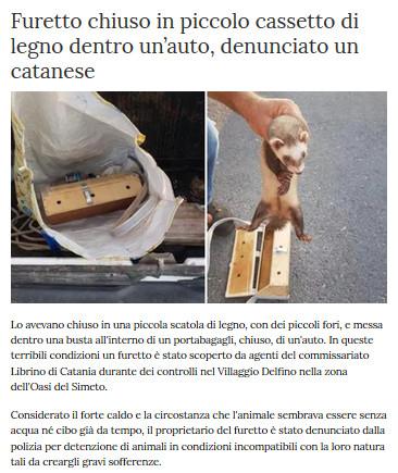 Notizie di animali....nel mondo - Pagina 5 Furett10