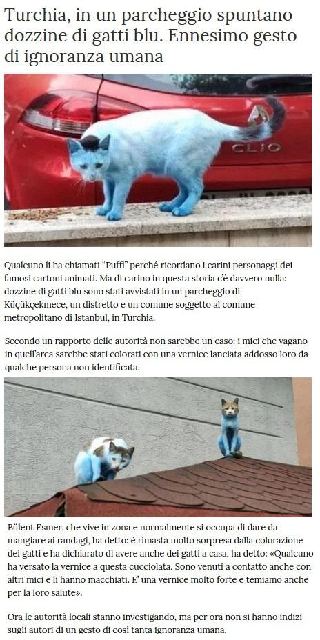 Notizie di animali....nel mondo - Pagina 8 Gatti12