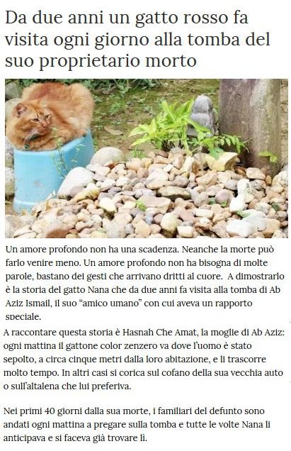 Notizie di animali....nel mondo - Pagina 7 Gatto12