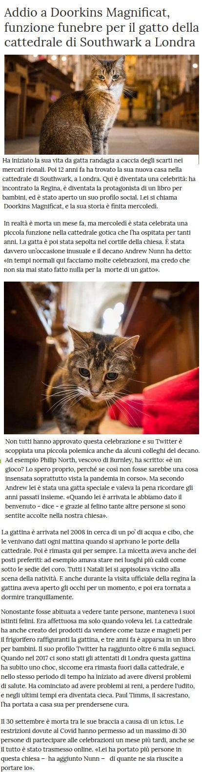 Notizie di animali....nel mondo - Pagina 8 Gatto13