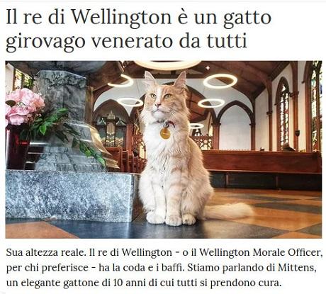 Notizie di animali....nel mondo - Pagina 2 Gatto_10