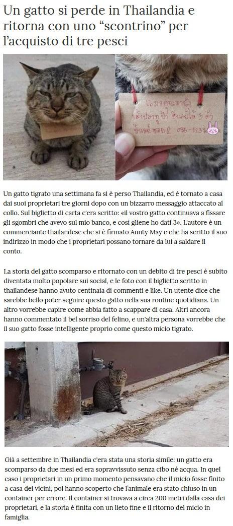 Notizie di animali....nel mondo - Pagina 8 Gatto_11