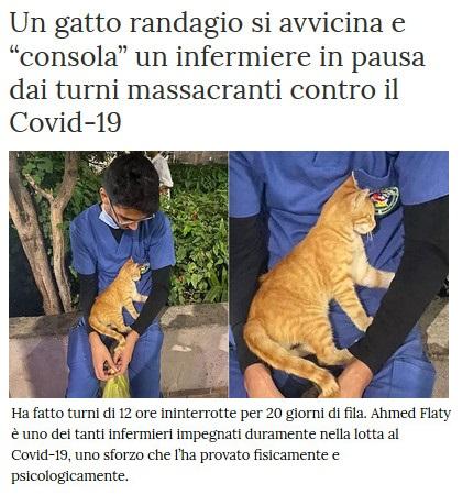 Notizie di animali....nel mondo - Pagina 8 Gatto_12