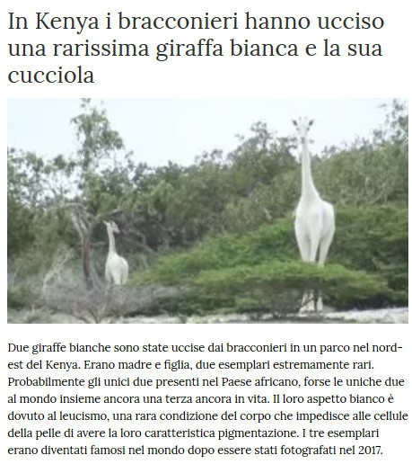 Notizie di animali....nel mondo - Pagina 2 Giraff11