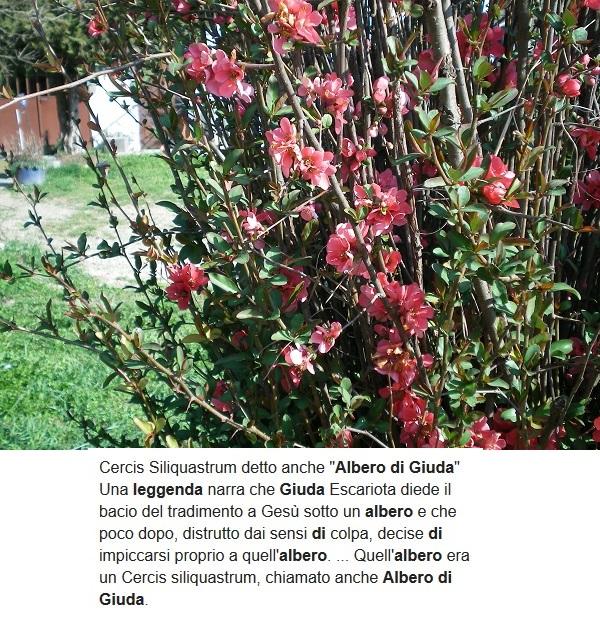 Le foto di Luisa - Pagina 4 Giuda_10