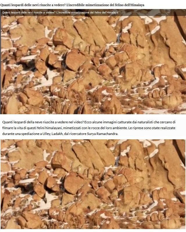 Notizie di animali....nel mondo - Pagina 8 Leo10