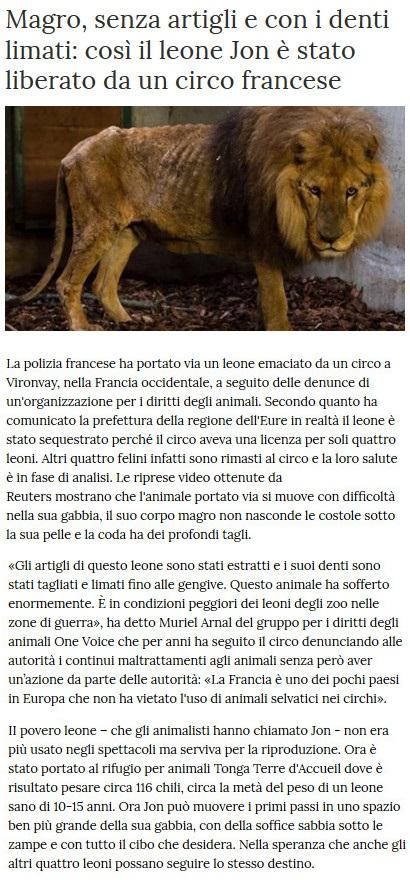Notizie di animali....nel mondo - Pagina 3 Leone11