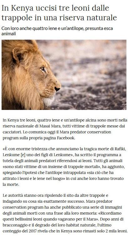 Notizie di animali....nel mondo - Pagina 7 Leoni10