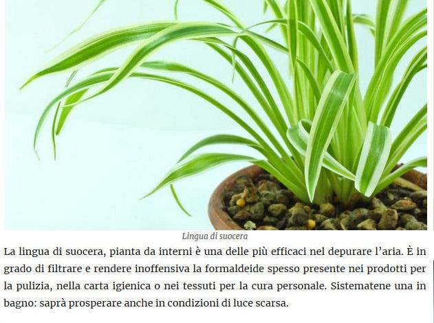 Le piante della salute Lingua10