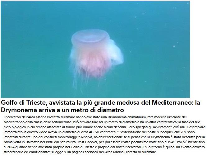 Notizie di animali....nel mondo - Pagina 3 Medusa10