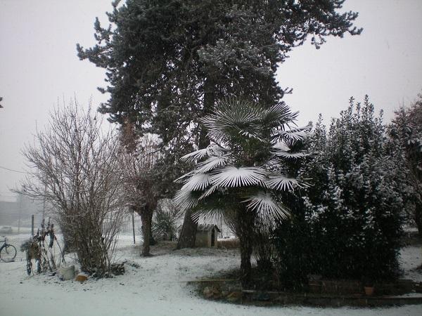 Le foto di Luisa - Pagina 3 Nevica10