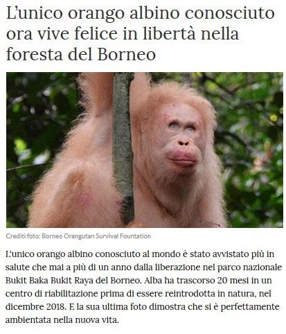 Notizie di animali....nel mondo - Pagina 2 Orango10