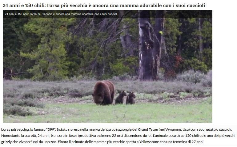 Notizie di animali....nel mondo - Pagina 4 Orsa10