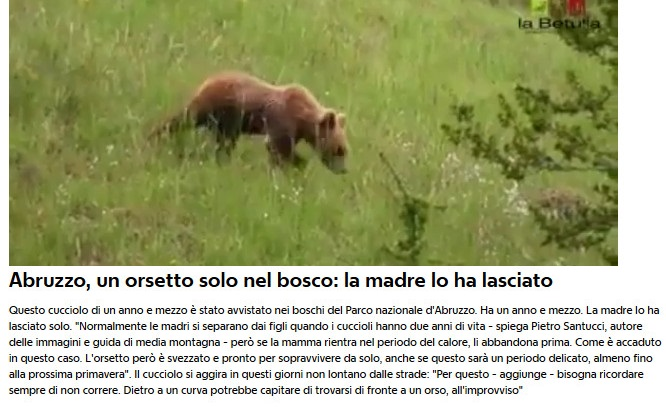 Notizie di animali....nel mondo - Pagina 4 Orsett10