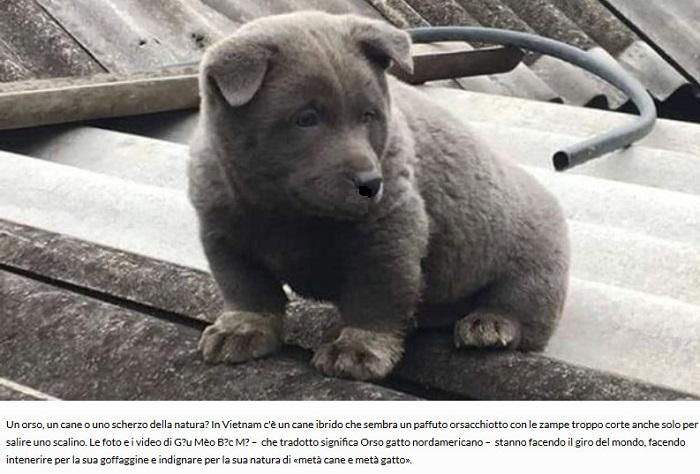Notizie di animali....nel mondo - Pagina 2 Orso_g10