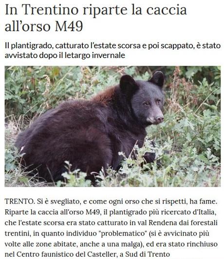 Notizie di animali....nel mondo - Pagina 2 Orso_m10