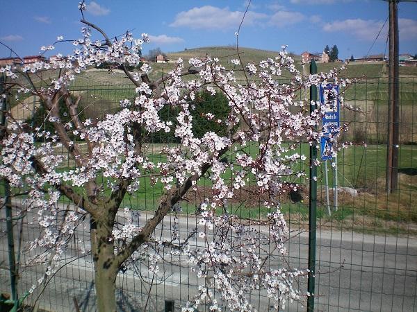 Le foto di Luisa - Pagina 4 Pavia10