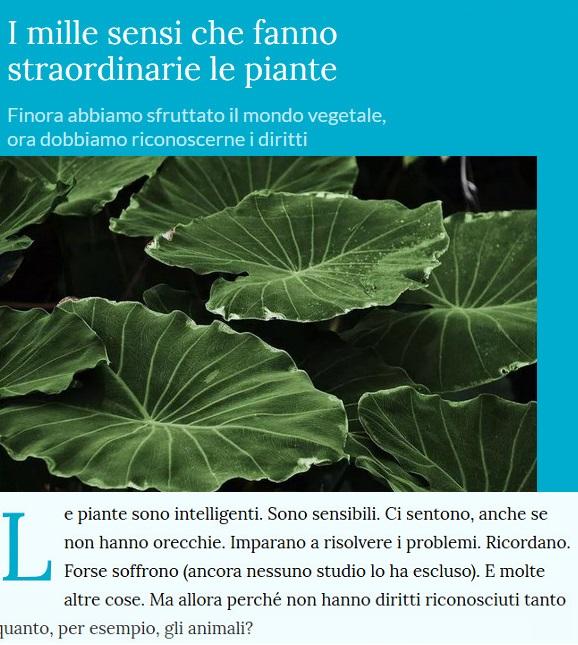 Le piante della salute Piante11