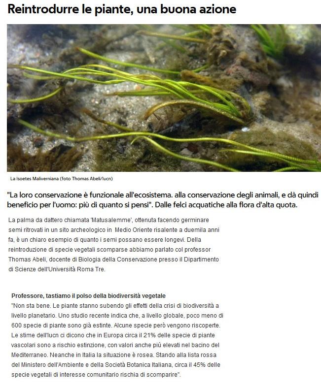 Le piante della salute Piante12