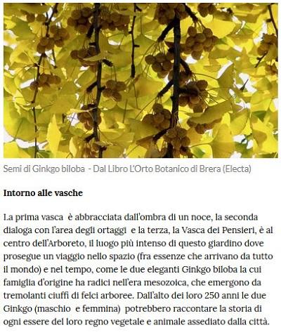 Le piante della salute Piante17
