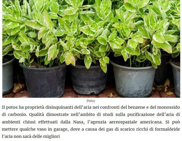 Le piante della salute Potos10